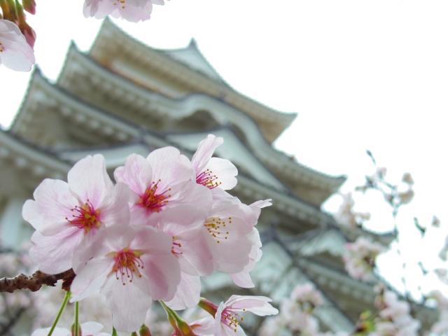桜と福山城