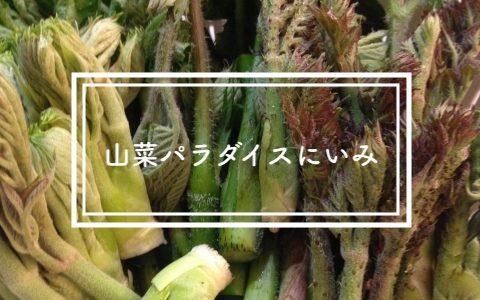 春の山は幸せいっぱい!ここは山菜パラダイス!