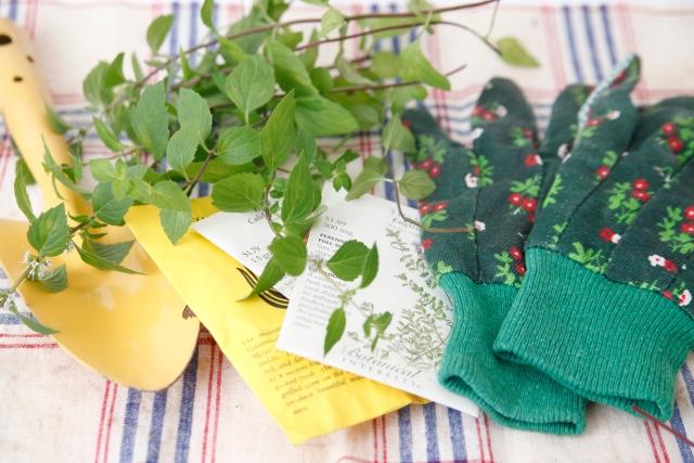家庭菜園をはじめよう
