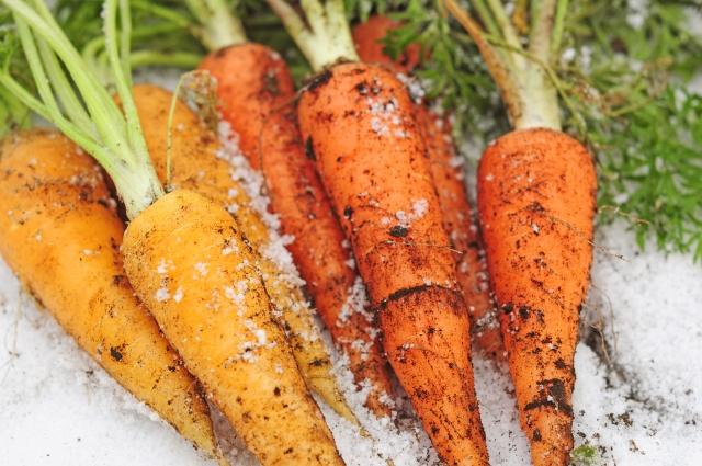 雪の中の野菜