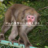 威嚇する猿
