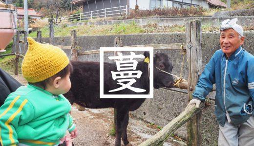 和牛のルーツ!神郷釜村に生きる竹の谷蔓牛!