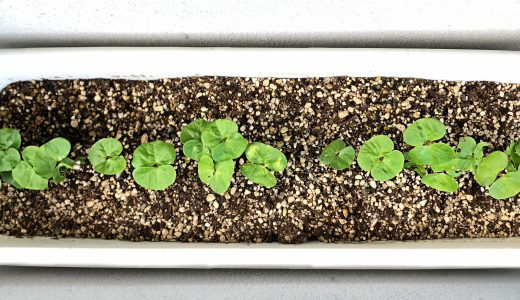 便利で手軽なプランター栽培に挑戦してみよう!