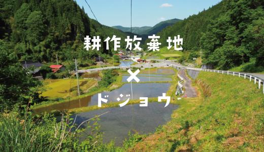 耕作放棄地  ×  ドジョウ 〜田んぼの有効活用のススメ〜