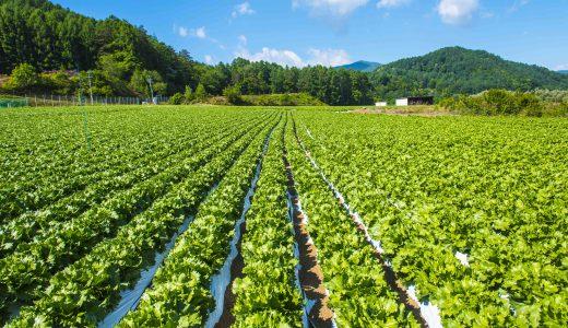 抑制栽培とは? 山の気候を使った農業のスタイル