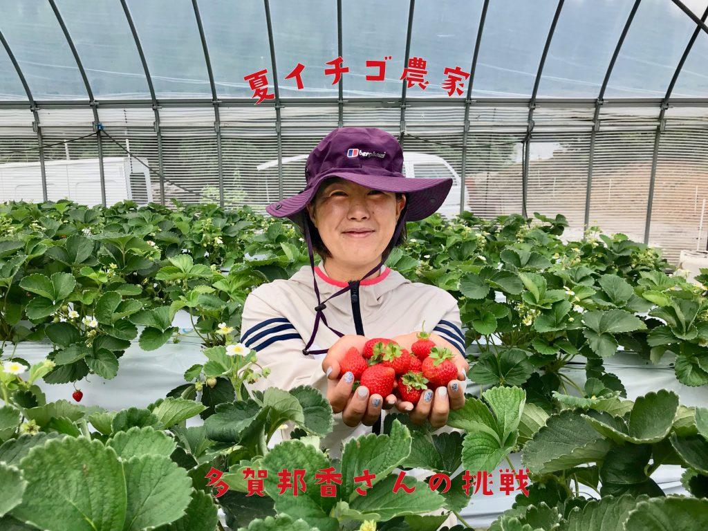 夏イチゴ農家