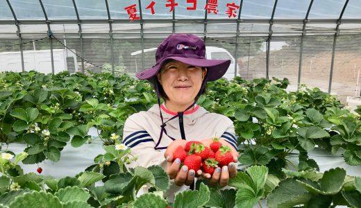 夏イチゴ栽培への挑戦!〜フルーツのまちを夢見る女性農家さんにインタビュー〜