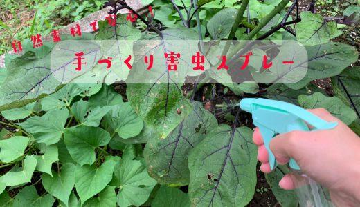 自然の素材を使った手作り害虫スプレーの作り方 〜オーガニックな家庭菜園〜